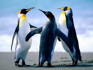 Penguin 3.0 Predictions